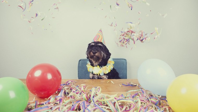 Dog Party Planner