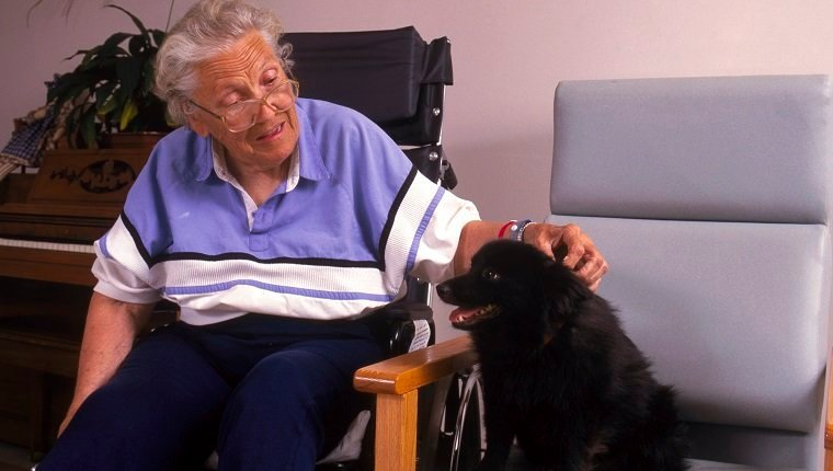 Therapy Dog Handler