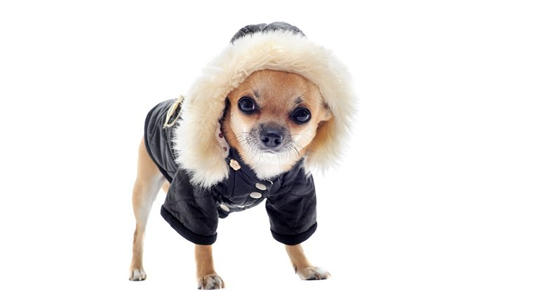 Humans And Dogs Should Layer Up