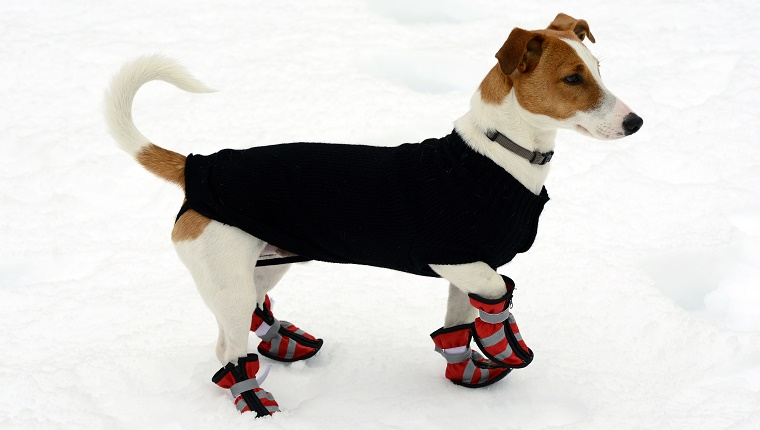Use Foot, Hand, And Paw Protection