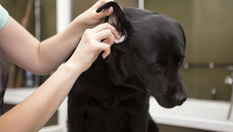 Dog Ear Cleaners