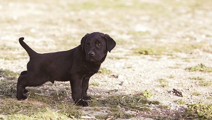 A Puppy's Need To Pee Takes Priority Over Yours