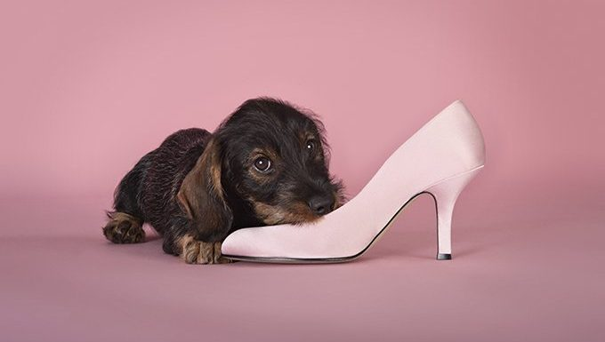 Your Pup Will Help Pick Out Your Wardrobe