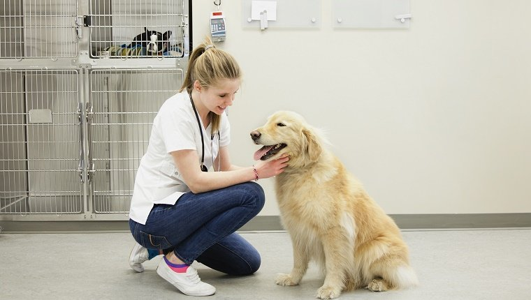 A List Of Local Animal Care Professionals
