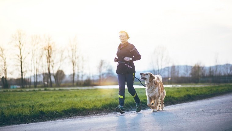 Make SomePositive Changes For Your Dog