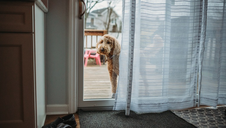 Always Keep An Eye On Your Dog When They're Outside